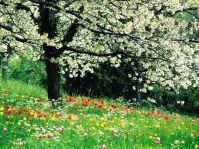 printemps0